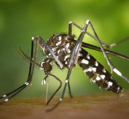 Mosquito Services