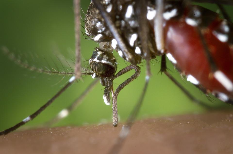 Mosquito Management Program