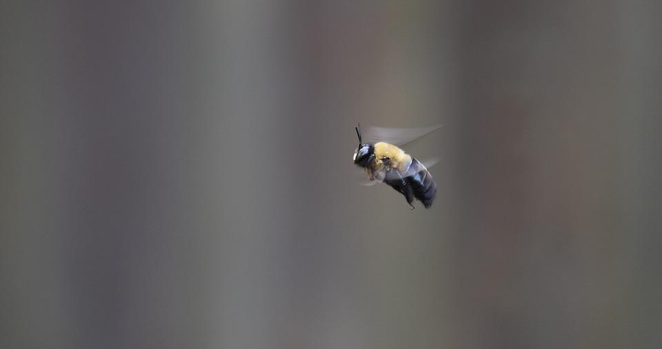 Seeing Bees?