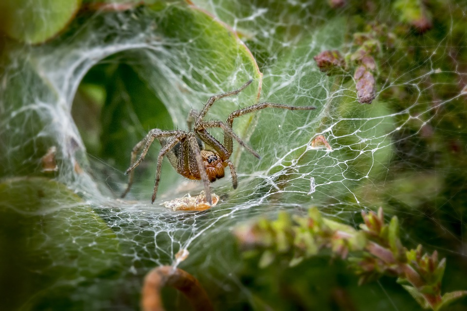 Seeing Spiders?